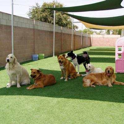 dogaccomodationcenters_final