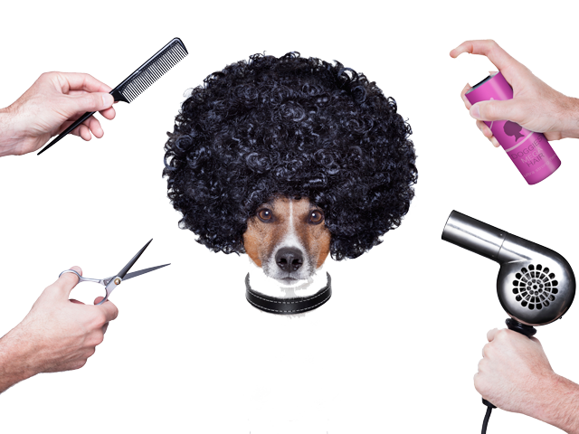 grooming-inside-2-new